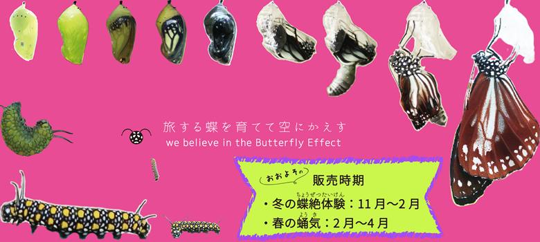 蝶とともに暮らすよろこび。蝶を育てるよろこび。蝶を空へ還すよろこび。たくさんのよろこびをあなたのもとへ。